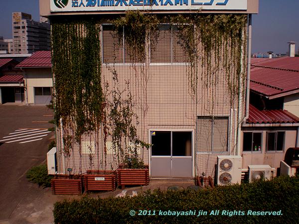 2011jin 026-600.jpg