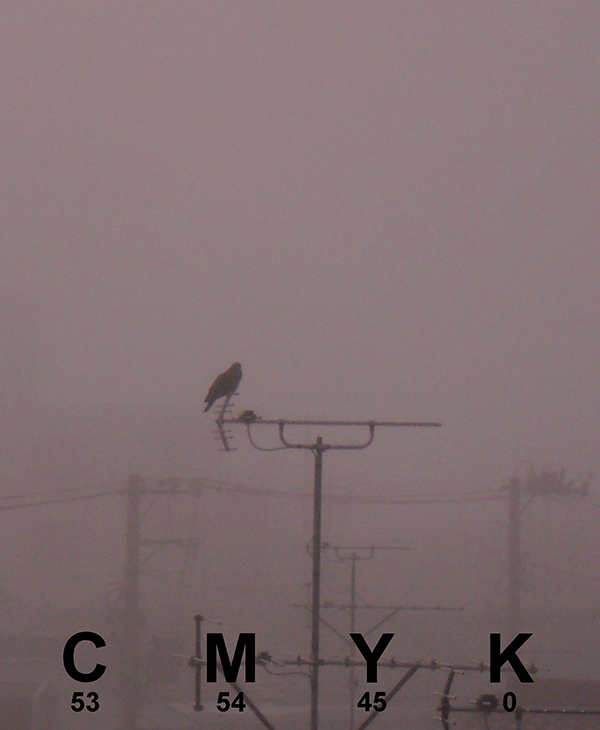 Warm gray crow.jpg